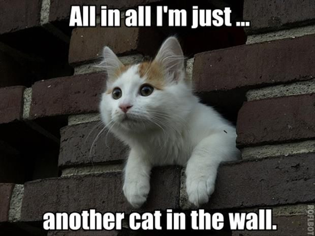 Didn't know whether to put this under animals or song lyrics so I put it under too funny. :)