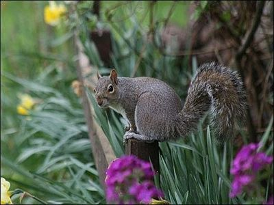 how to keep squirrels out of a garden