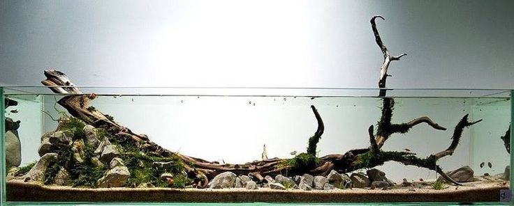 Long river www.ibrio.it your aquarium born here ! il tuo acquario nasce qui ! https://www.facebook.com/ibrio.it #ibrio #acquario #acquari #acquariologia #acquariofilia #aquarium #aquariums #piante #natura #pesci #zen #design #arredamento #layout #layouts #layoutdesign #roccia #roccie #moss #freshwater #plantedtank #aquadesignamano #tropicalfish #fishofinstagram #aquaticplants #natureaquarium #nanotank #reefkeeper #nanoreef #saltwateraquarium from web