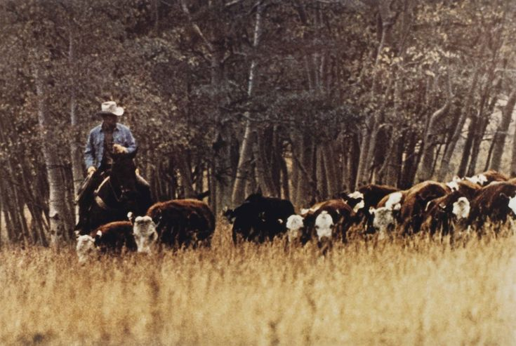 Richard Prince (B. 1949) Untitled (Cowboy) signed, inscribed and dated 'R Prince AP 1980-86' (lower right) Ektacolor print mounted to board image: 27 1/4 x 39 7/8 in. (69.2 x 101.2 cm.) Executed in 1980-86. This work is the artist's proof aside from an edition of two plus one artist's proof and is accompanied by a certificate of authenticity signed by the artist.