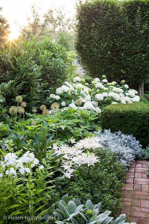 """This variety of shades is vital in a space limited to one or two colours, in order to break everything up a bit and add lots of visual interest. Here you can see the hydrangea Annabelle, lilies, alliums Senecio, Lamb's Ears, Phlox..."""