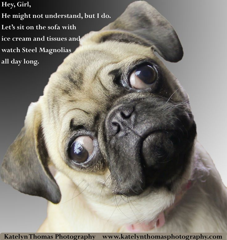 Related Keywords & Suggestions For Happy Pug Meme