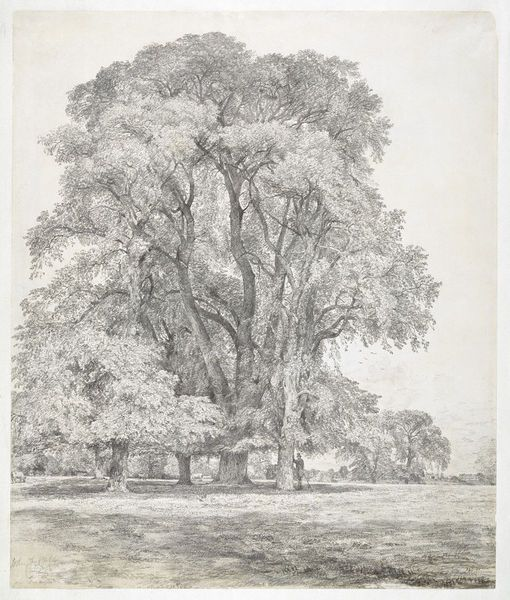 Elm trees in Old Hall Park, East Bergholt, John Constable, 1817.  For more information on Constable Country visit www.visitsuffolk.com