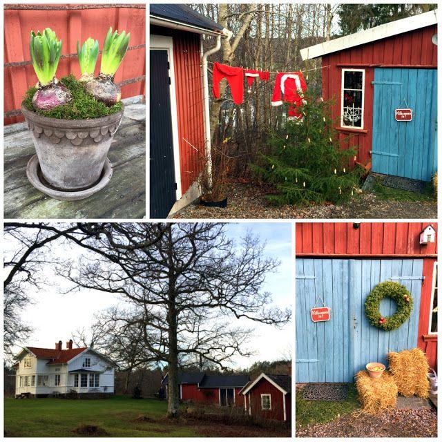 VisaLiza            : Hagalund trädgård om julen