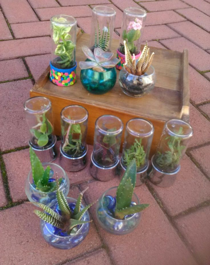 Mini terrariums. .recycled spice jars.
