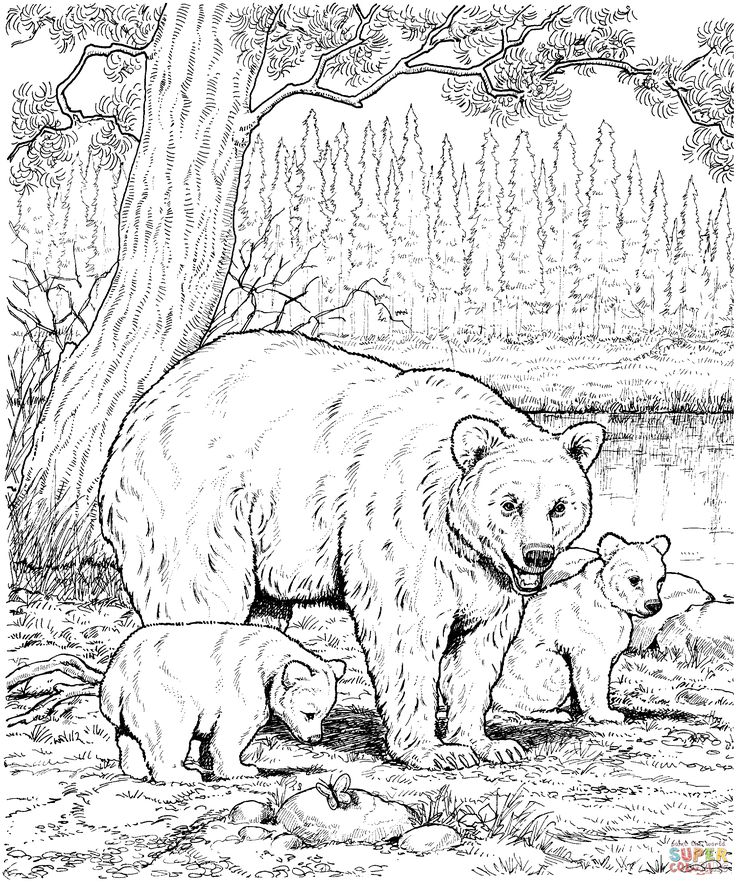 American Black Bear Family coloring page | SuperColoring.com