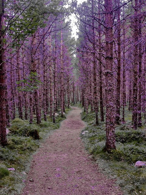 Purple Forest in Inverey, Scotland, GB (With natural colourings) by Jordan Moffat Photography, via Flickr