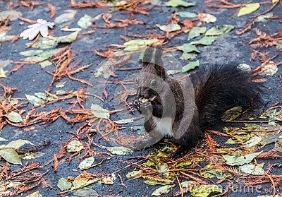 Little sweet squirrel on the ground holding in paws food.
