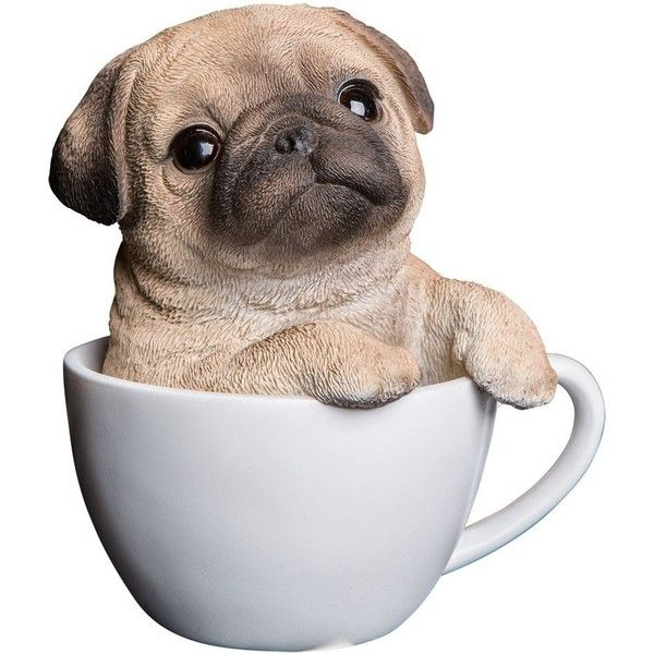 Percy The Pug In A Teacup Money Box 38 Liked On Polyvore