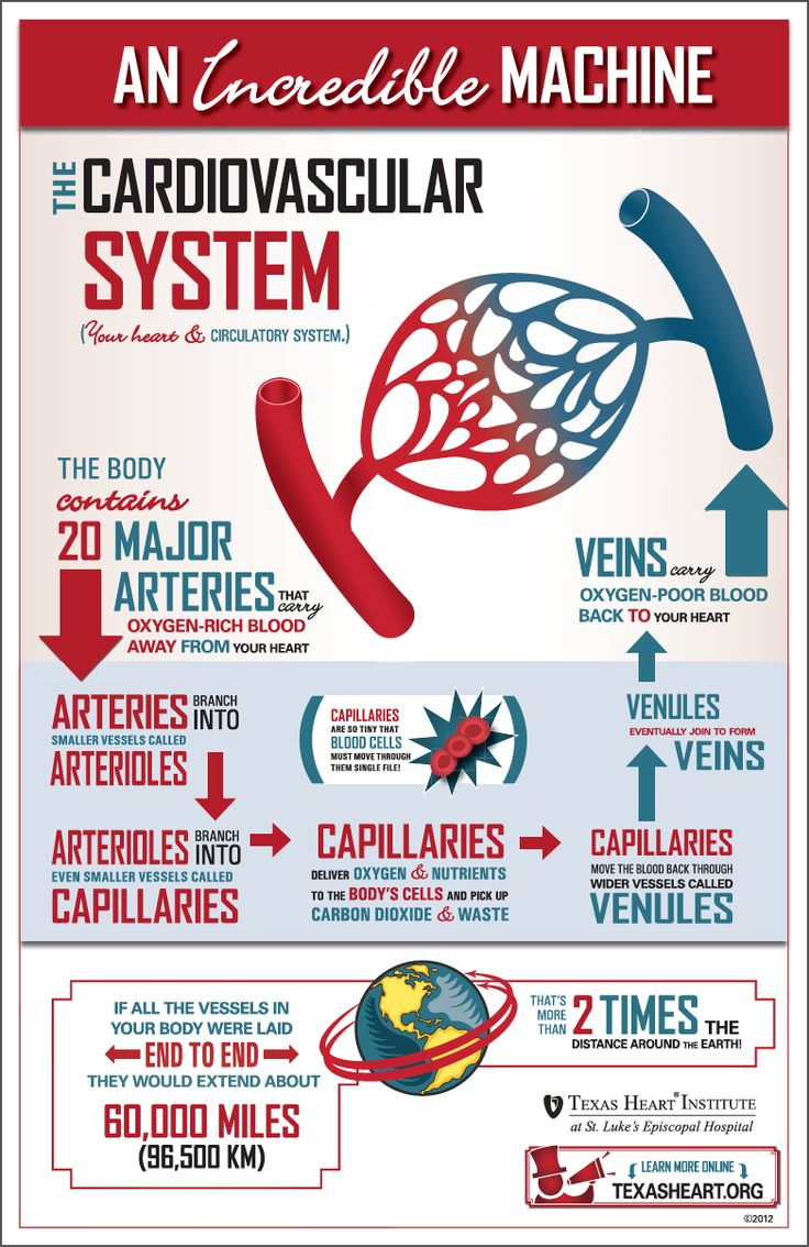 Human Body Facts - PiR Resourcing Human Physiology - Fun facts about the cardiovascular system, an incredible machine in the human body.