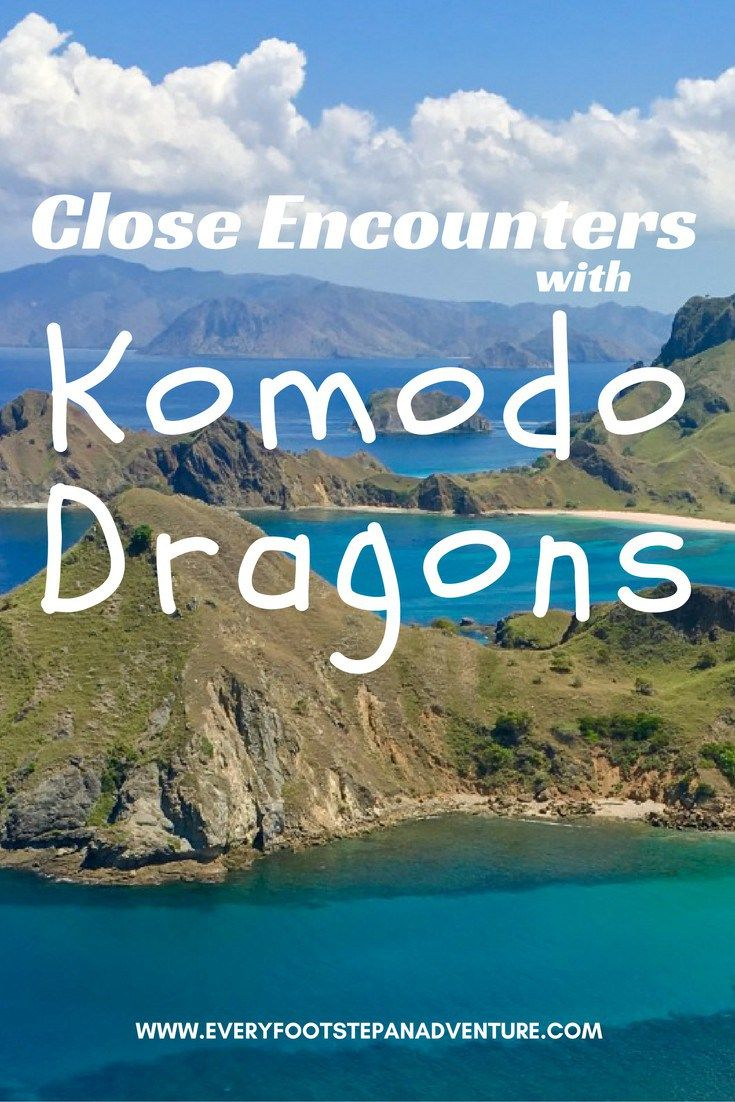 And there I was, face to face with the fearsome Komodo dragon... Here are four stories of my encounters with the Komodo dragons of Indonesia!