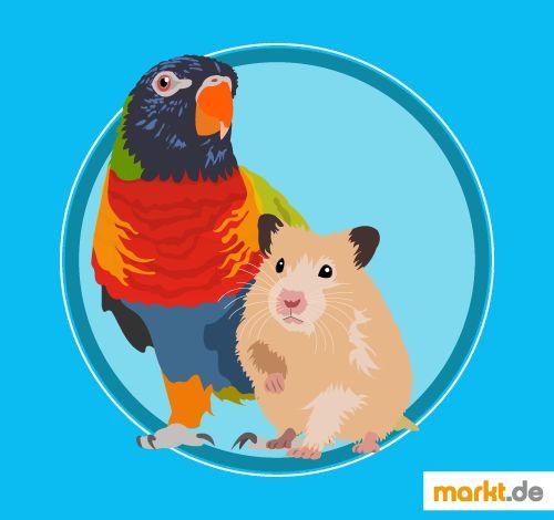 Vertragen sich Nagetiere 🐹 mit Ziervögeln 🐦? | markt.de #vogel #nagetier #hamster #maus #meerschweinchen #haltung #ziervögel