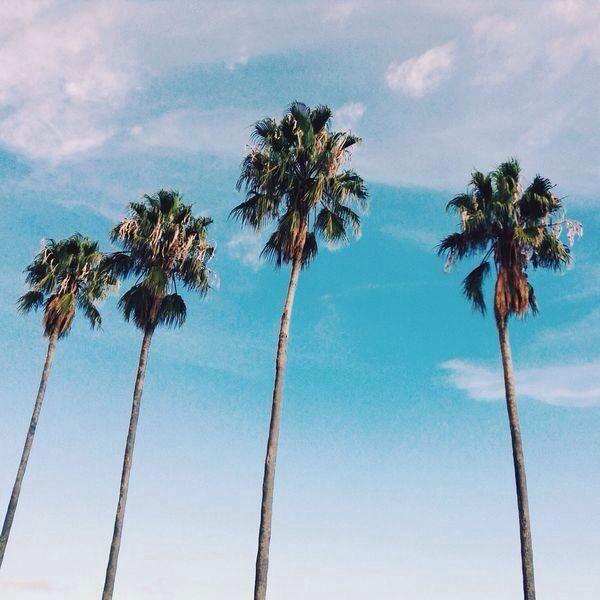 California Dreamin Summer Sun Vibes Its Summertime Beach Bum Palm Trees Palms Travel Bugs Surfers