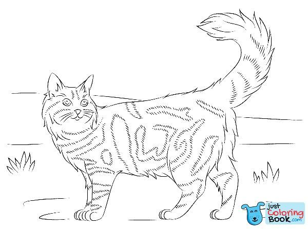 Pin Di Cat Coloring Pages
