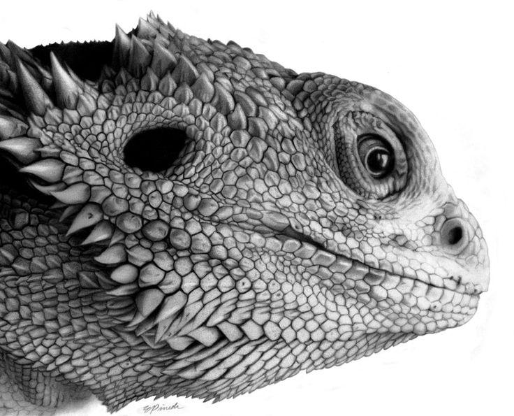 Realistic Lizard Drawing