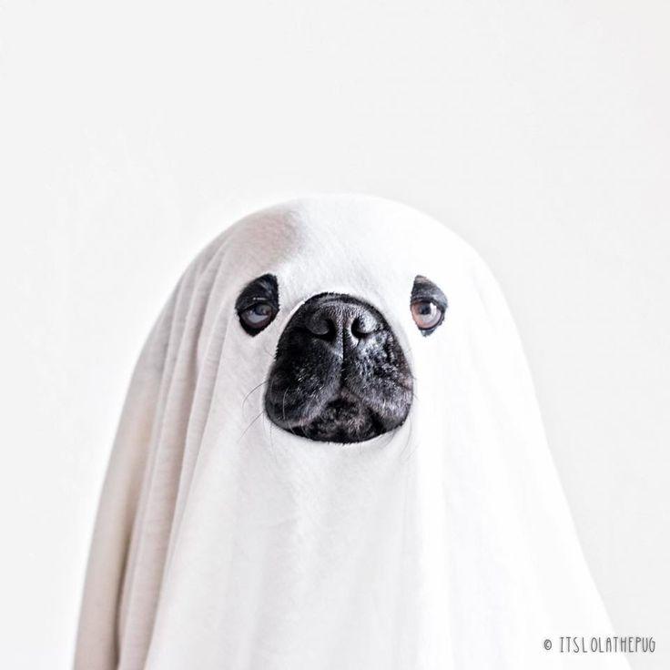 Best 25+ Pugs in costume ideas on Pinterest