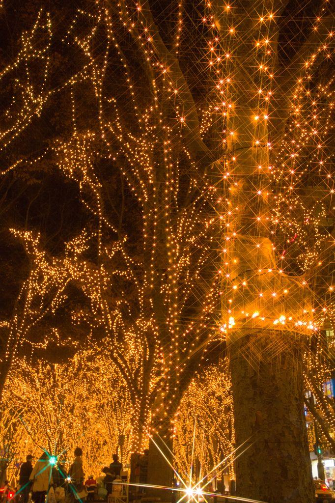 冬に行われる仙台光のページェントは圧巻の美しさ!仙台の見所一覧。