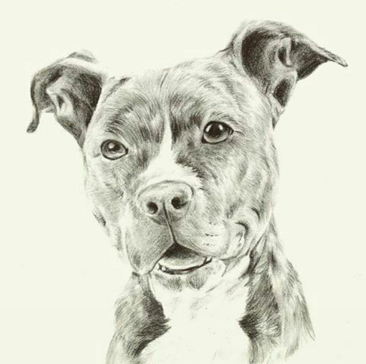 Картинки карандашом собаки питбуль