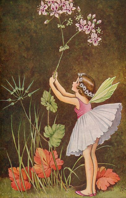 A Bunch of Wild Flowers, by Ida Rentoul Outhwaite