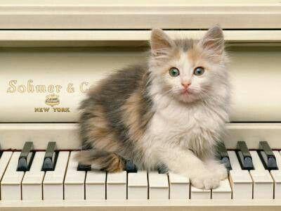 Kočička hraje na kravir