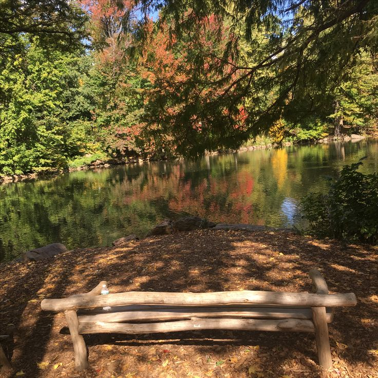 I wanna grow old on this bench! 🍂 #fall #nyc #vibes #centralpark #harlem #amazing #autumnal #iwannagrowoldhere #bench #newyork #manhatten #nofilter #beautiful #peaceful #dontwanttoleave