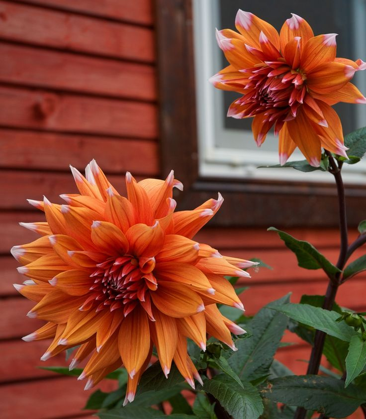 Rustic flowers by Elena Stuukstly Kozyryatskaya on 500px