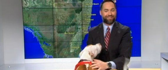 Live Weather Report Interrupted By Ecstatic Dog Who Can't Wait To Be On TV  seeing so many people are now dumping their dogs and cats and the Miami Shelter this was priceless~