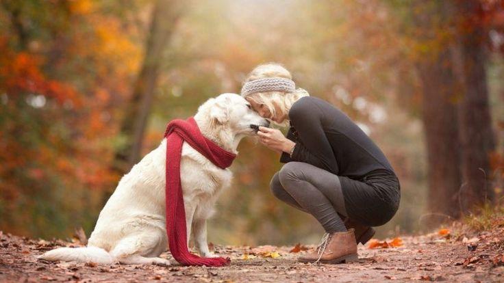 Lo que desconoces de los perros Una cola meneando no siempre significa que son felices El meneo de la cola tiene su propio idioma. Aparentemente los perros mueven su cola a la derecha cuando están felices ya la izquierda cuando están asustados. Moverse bajo significa que son inseguros. Los movimientos …