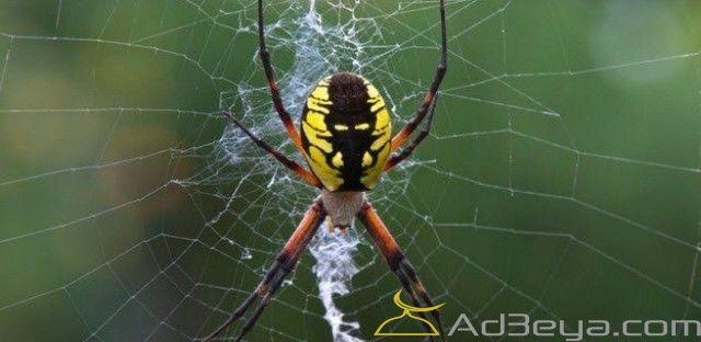 تفسير حلم العنكبوت في المنام بالتفصيل العنكبوت العنكبوت البني العنكبوت في المنام الهروب من العنكبوت Vegetable Garden Planning Garden Pests Spider