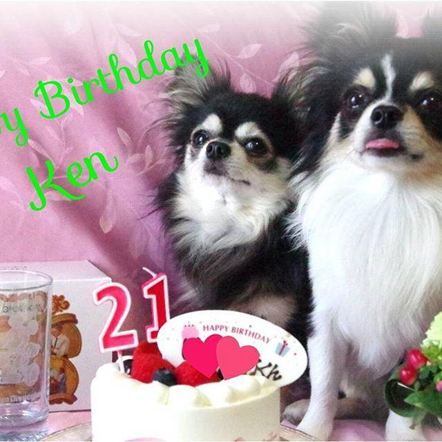 * 今日は7月10日❗ 納豆の日❗ そして❗Kenの#誕生日 🎉 Ken☆21歳のお誕生日おめでとう🎉✨😆✨🎊 * Kenが納豆が大好きな理由がわかったわ🎵納豆の日に生まれたからなんだね👌 * 夕飯は大好きな唐揚げ2kg揚げてお祝いします~🙌💕 * プレゼントは名前入りのミッキーのグラス🍷(母ちゃん不注意で割り😥友達に頼んで買ってきてもらいました)🎵 ケーキはいつものケーキ屋さんがお休みなので、コージーコーナーのケーキ🎂で許して😢大好きなジャンボプリン🍮付き😊💕 * 命日は忘れたい日😭 誕生日はKenが生まれてきてくれた大事な日❗毎年、お祝いしてあげたい🎁🎂 * バカ母ちゃんでごめんね🙏💦💦 * * #ちわわせ💝 #チワワ #ちわわ #チワワロング #チワワ画像 #チワワ大好き #チワワ可愛い #チワワ多頭飼い #親バカ部 #愛犬 #愛息子 #チワワ部 #お誕生日 #誕生日ケーキ #chihuahuas #chihuahuaphoto #chihuahuacute #chihuahualife #chihuahuaslover…