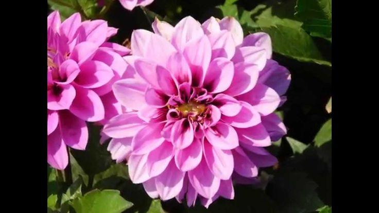 Flores Bonitas De Jardin Con Sus Nombres 2015 - YouTube