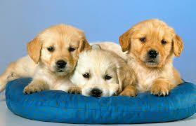 foto bij artikel Ontwikkelen kinderen met huisdieren later minder allergieën en obesitas?
