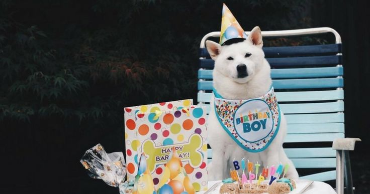 Ever planned your pooch a party? Check out these tips to plan the perfect pet themed party! http://www.entirelypets.com/dog-birthday-party-planning.html?utm_source=twitter&utm_medium=web&utm_campaign=eptwpostarticle