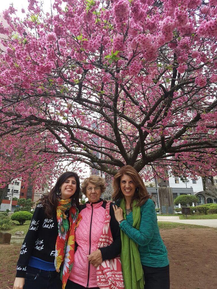 Florada Cerejeira Praça Japão em Curitiba 2016
