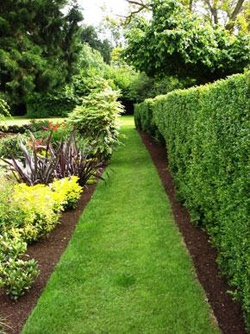 hedge with plantings