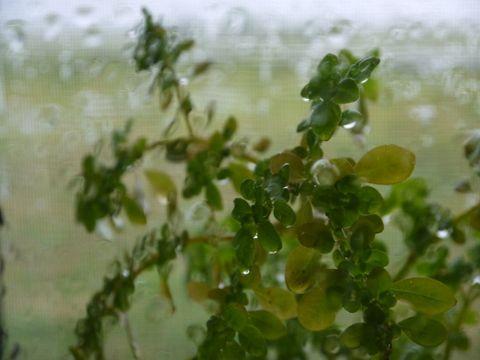 Sobre la cornisa de la ventana las plantas se mojan discretamente.