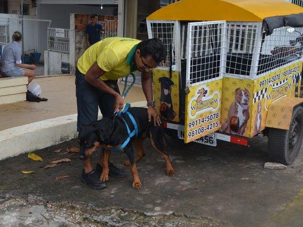 Adestrador cria 'moto-táxi' exclusivo para transporte de cães em Macapá Adestrador criou serviço após não ter como transportar cão de estimação. 'Táxi Dog' atende a vários pontos na capital; divulgação é feita pela internet.