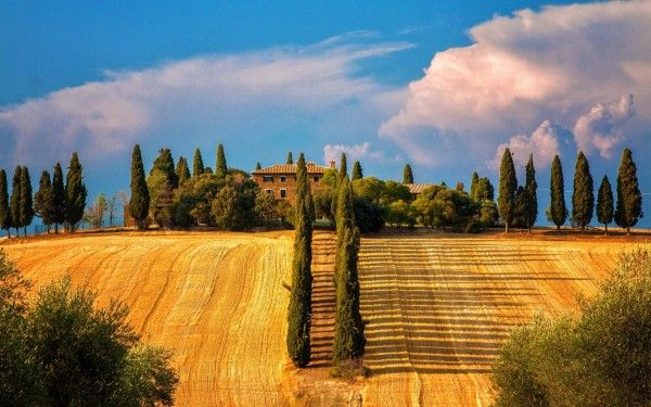 Italy-Siena-Tuscany-trees-cypresses-fields-house-summer_1920x1200