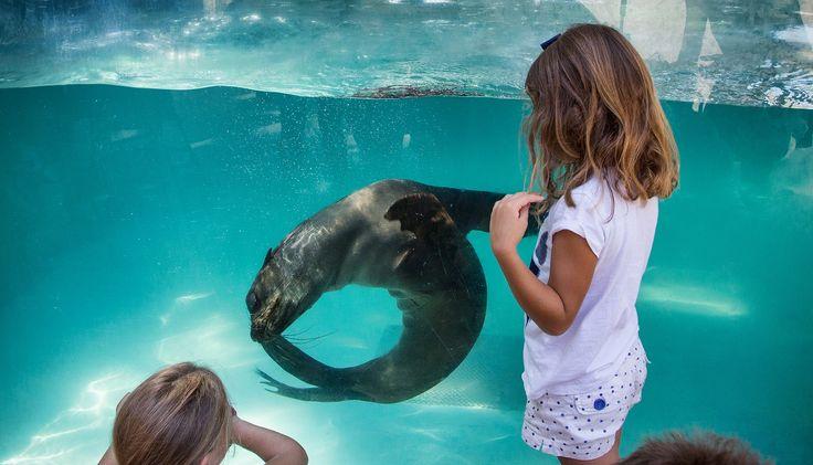 Niños con oso marino en Río Safari Elche