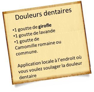 douleurs dentaires huile essentielle girofle Lhuile essentielle de girofle contre les douleurs dentaires: