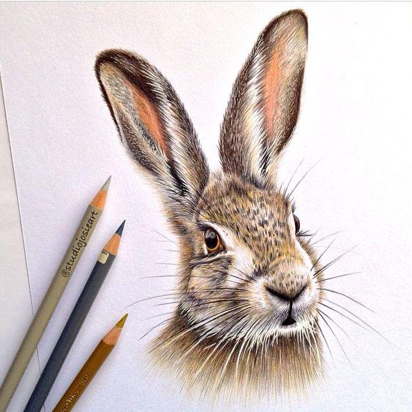 58 besten buntstifte stifte tiere zeichnen bilder auf pinterest malen und zeichnen tiere - Hase zeichnen ...