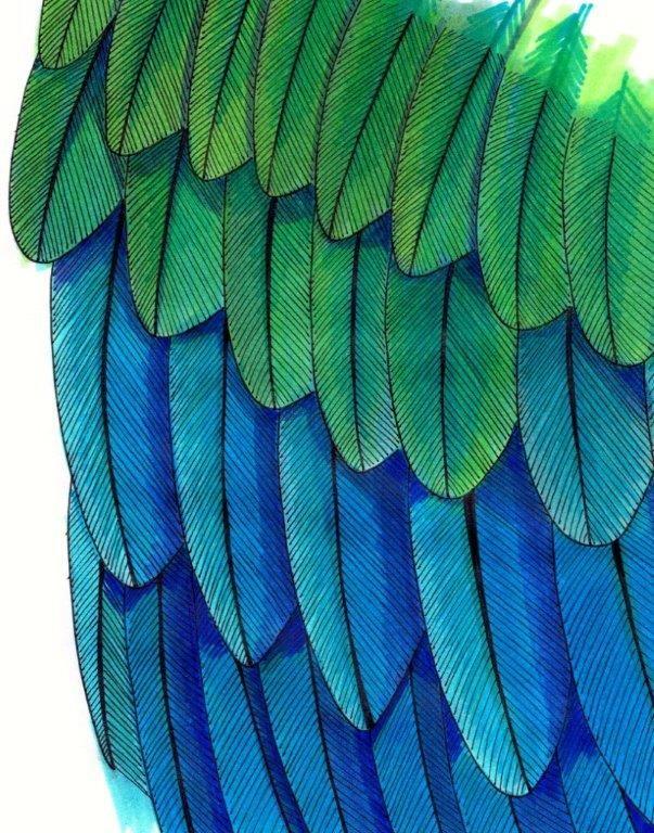 Feathers. Unipin fine liner with Copic markers. http://vicpratt.wix.com/vickypratt Find me on Facebook Vicky Pratt - Illustrator.