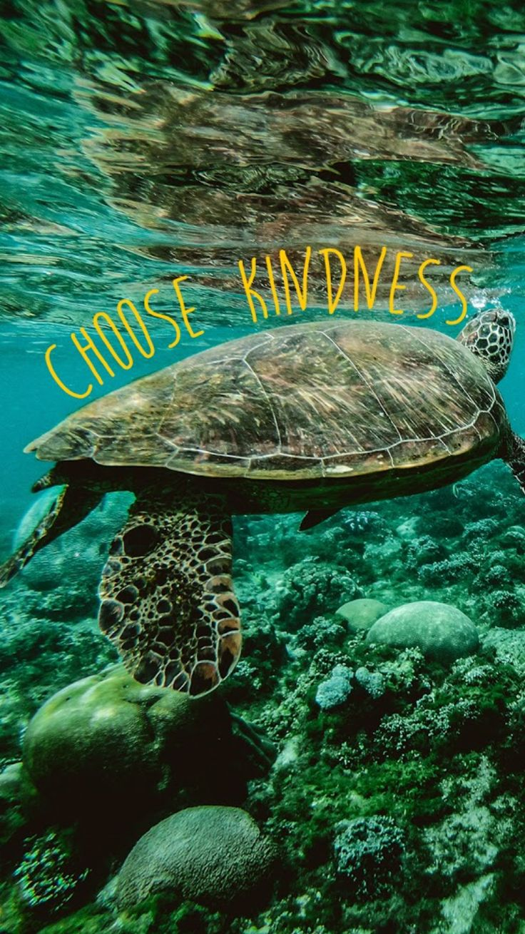 Choose Kindness Yellow Aesthetic Wallpaper Home Screen Bright Inspirational