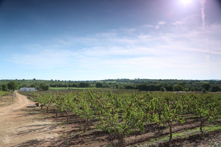 #Puglia #countryside