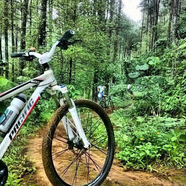 selamat pagi :) sudah sabtu nih besok minggu rencana mau kemana nih #PACIFICBIKERIDER ? sepertinya paling enak kaya om @kuwatno menjauh dari kehidupan kota dan kembali ke hutan. ya gak om? hehe  #pacificbikes #pacificbikerider #sepeda #sepedagunung #bersepeda #gowes #hardtail #mountainbike #mtbindonesia #crosscountry #forest #green #tree #dirt #track