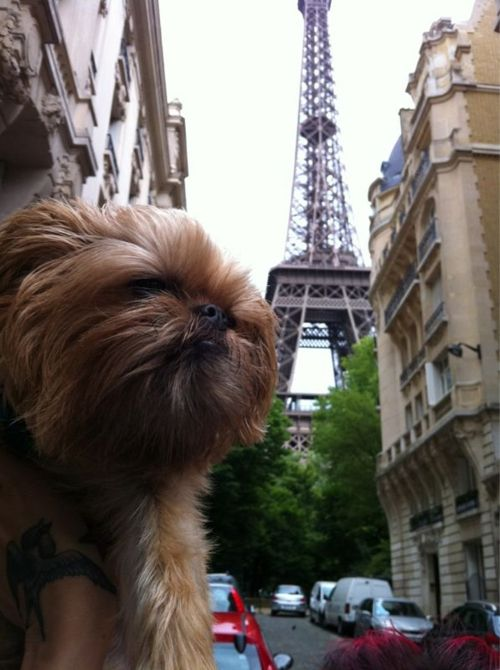 hanzobladeofsteel: Eiffel Tower!!!- Love this! #dogs