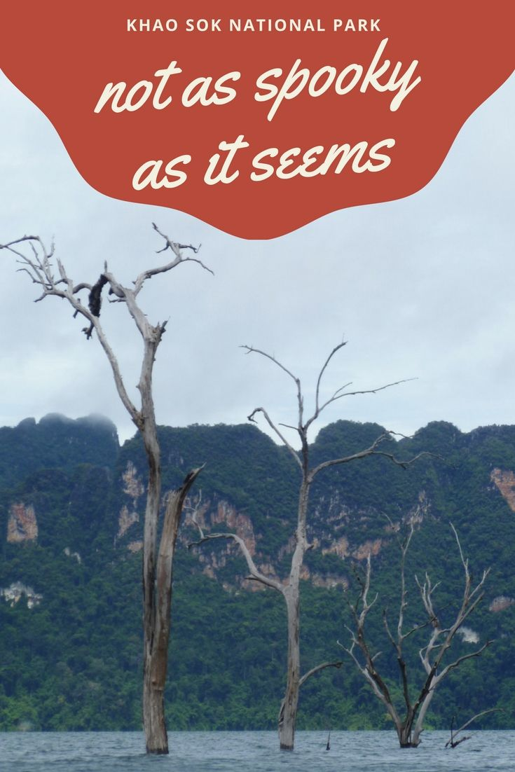 Khao Sok National Park – künstliche Schönheit. Bizarre aus dem Wasser ragende Bäume. Und doch ist die Gegend nicht ganz so, wie man auf den ersten Blick glauben möchte. http://www.travelcurly.com/khao-sok/ #travelcurly