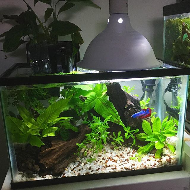17 Best Images About Fish Aquariums And Ponds On