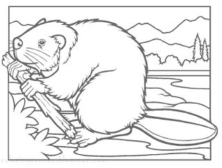 Beaver Coloring Pages Printable