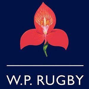 Western_Province_Rugby_Logo.jpg (300×300)